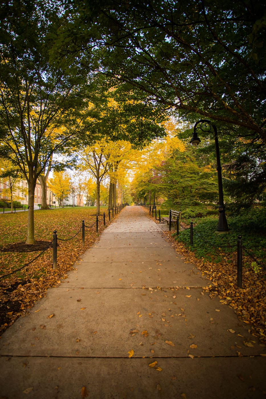 Autumn Walk, Penn State by Bob Lambert Photography