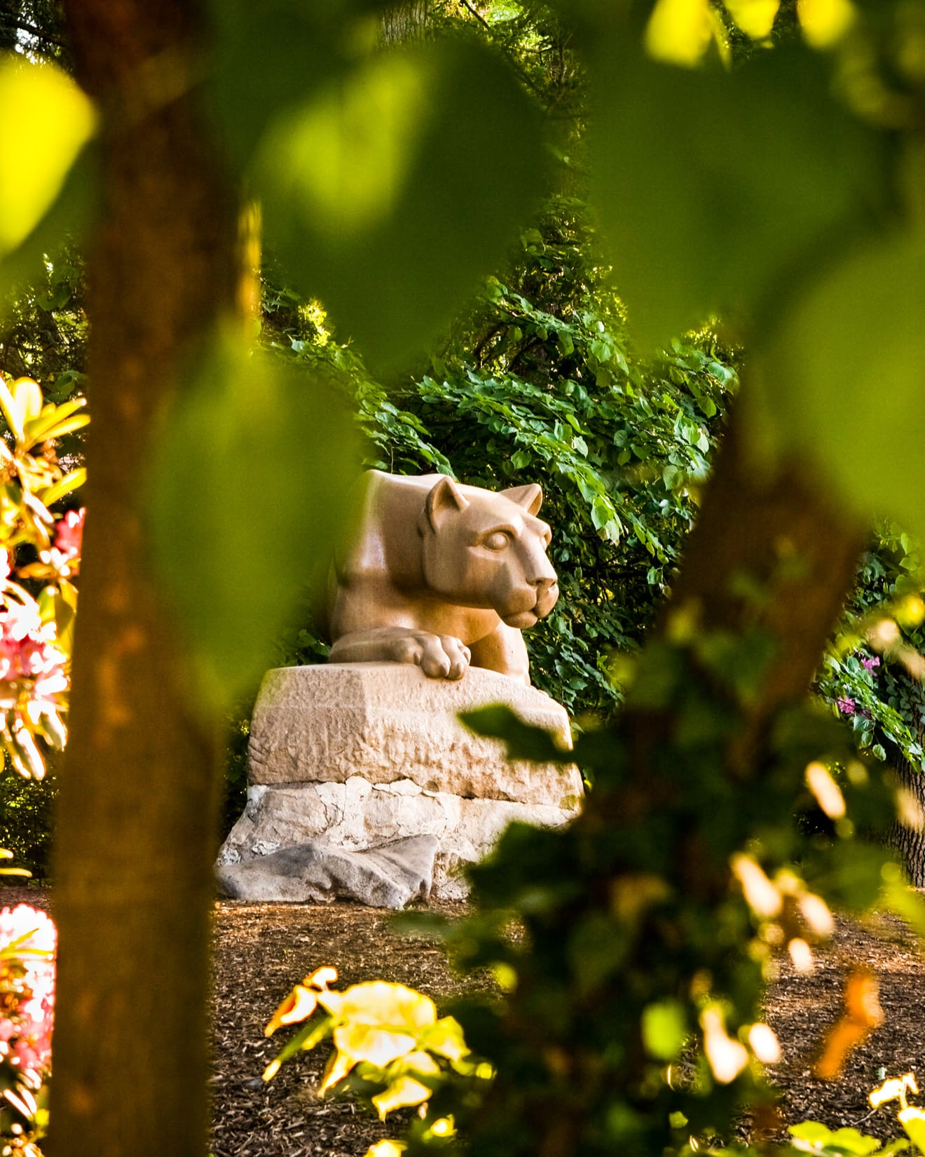 Lion in Hiding by Bob Lambert Photography (Nittany Lion Shrine, State College, PA)
