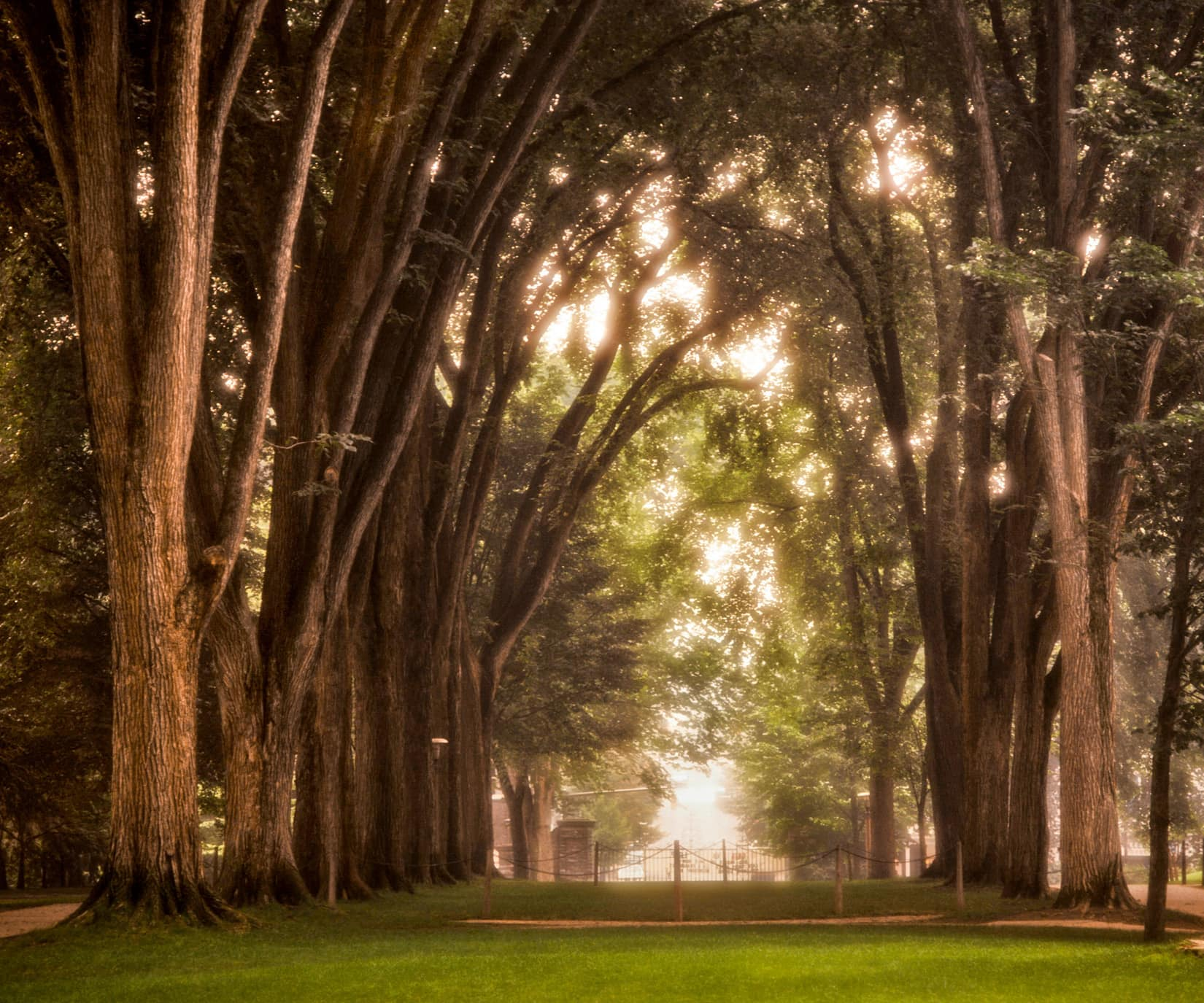 Through the Elms, by Bob Lambert Photography (Penn State Campus, State College, PA)