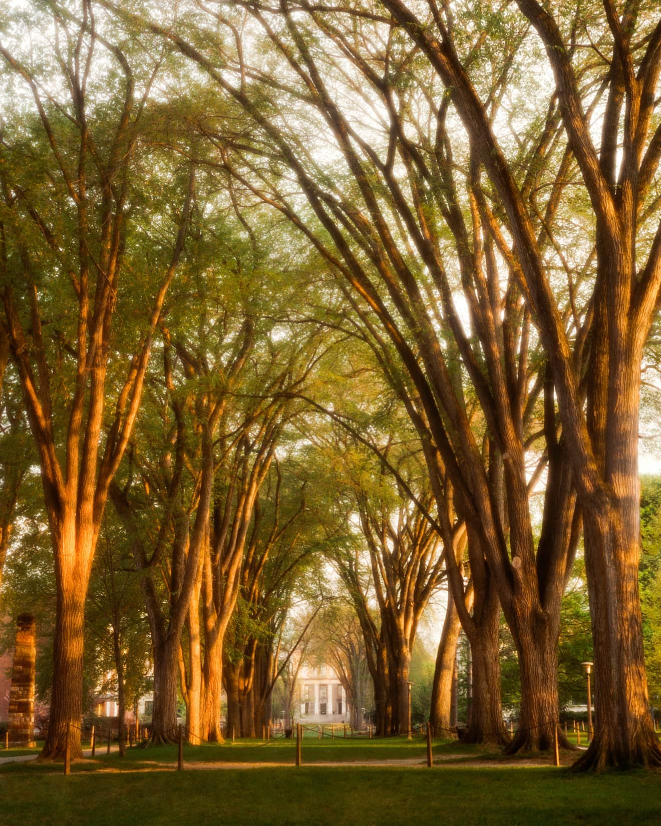 The Elms, by Bob Lambert Photography (Penn State Campus, State College, PA)